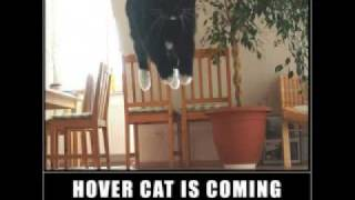 FUNNY CAT PICS EPISODE 5!!!!!!!!!!!!