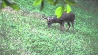 11 Point Buck Ducks Arrow, Savanna, IL Deer