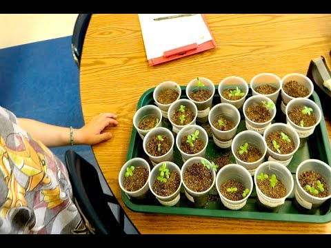 GROWING MARIJUANA IN CALIFORNIA SCHOOLS