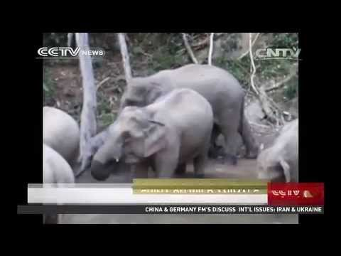 Beijing bans ivory imports for one year