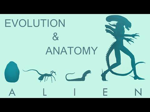 Эволюция и Анатомия Чужого | Alien
