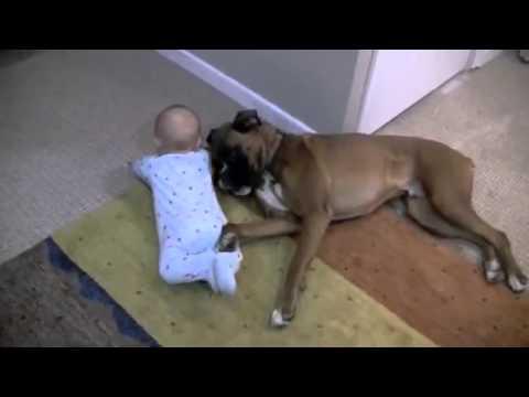 собака воспитатель 3