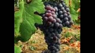 Cavalleria Rusticana 34 Viva Il Vino Spumeggiante 34