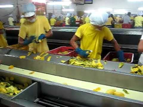 Supersonic Mango peeling in Cebu, Philippines, Roilo Golez Godzilla!