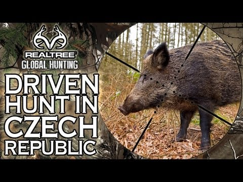Epic Wild Boar Hunt In The Czech Republic video