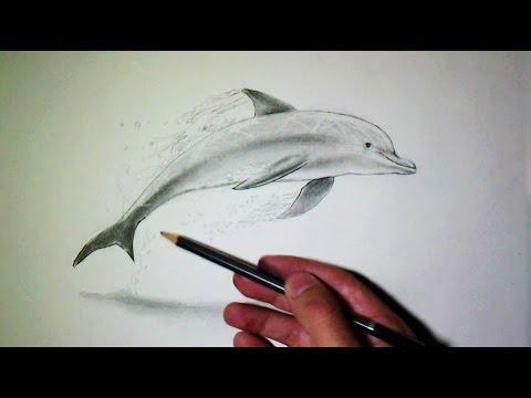 Comment dessiner un dauphin tutoriel youtube - Comment dessiner un tigre ...