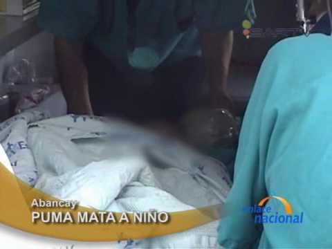 (Imágenes fuertes) Niño muere devorado por puma en zoológico