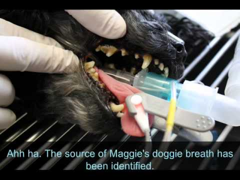 Dog Professional Dental Cleaning