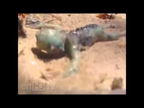 Sirena Bebe Viva Encontrada En La Playa