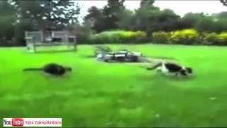 Youtube Video Divertenti Gratis Gatti Divertenti 21