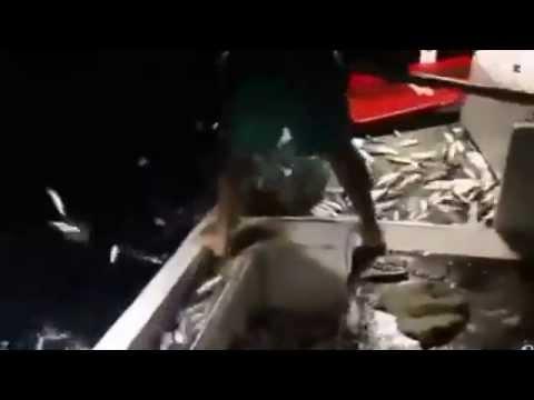 Dynamite fishing in Lebanon