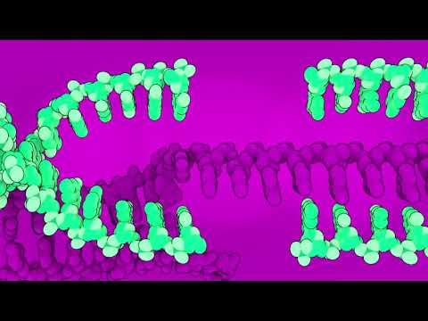 Cas9: The Enzyme, The RNA, & The Virus