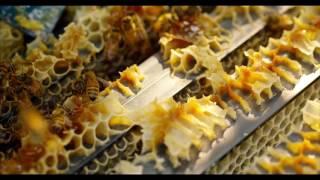 Honey Bees 96fps In 4K ULT