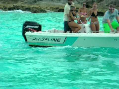 Shark Juvenile Juvenile Bull Shark Attacks
