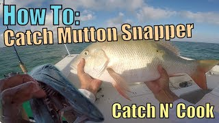 How to Catch MONSTER Mutton Snapper Fishing Key Largo | Catch N Cook