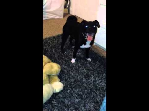 Dog Having Sex video