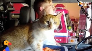 Stray Cat Shows Up At Fire Station And Moves Right In With Firefighters | The Dodo