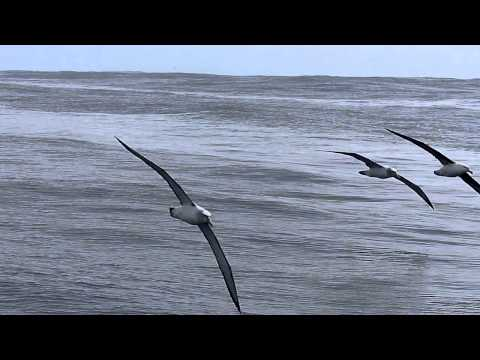 Port Fairy Pelagic