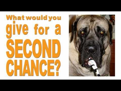 Vick Chew Toy Commercial