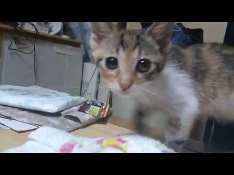 子猫 三毛さん(2016.06.29)