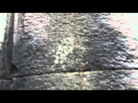 Video umsccsdpm 10 - River of ants in Preah Khan Temple, Angkor