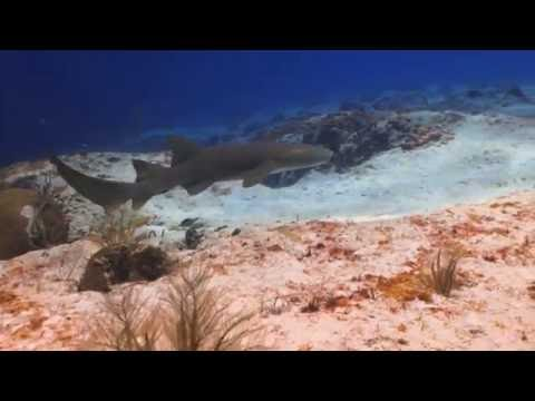 Shark Tips and Myths with Marine Scientist Dr. Keith Korsmeyer