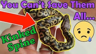 When and How to Euthanize a Snake