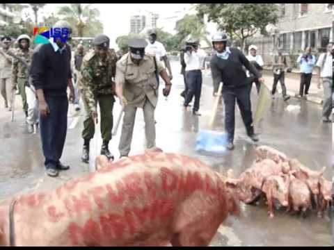 KSPCA ON USE OF LIVE PIGS IN OCCUPY PARL DEMO