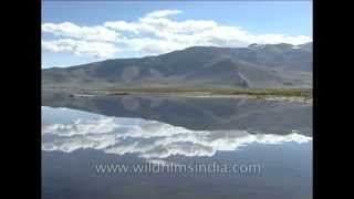 Road To Ladakh - Ladakh: barren + stark = extreme beauty!