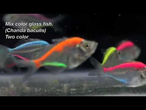 Colorful Fish Painting Color Glass Fish Aquarium