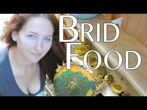 Grow your own homemade bird food