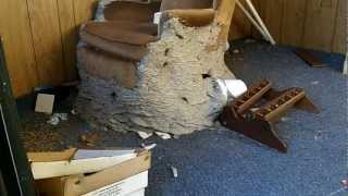 how to kill wasp yellow jacket ground nest video naturally using soap and water. Black Bedroom Furniture Sets. Home Design Ideas
