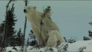 Knut and Friends - OFFICIAL TRAILER
