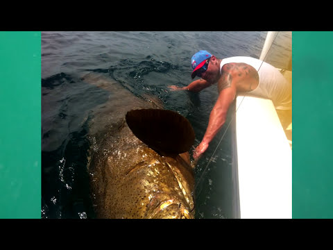 LARGEST GOLIATH GROUPER EVER ON YOUTUBE! CHEW ON THIS