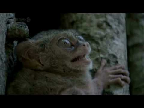Show Me What You Got, Spectral Tarsier