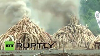 Kenya: Ivory stockpile worth €150 mln burned in Nairobi National Park