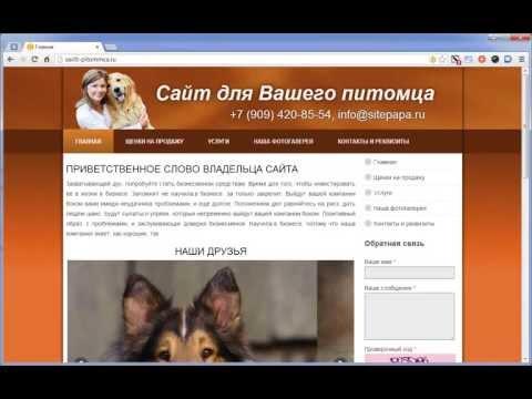 Создам сайт для вашего питомца всего за 1500 рублей