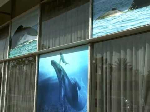 Video Blogs from the International Whaling Commission 2010 Meetings in Agadir, Morocco