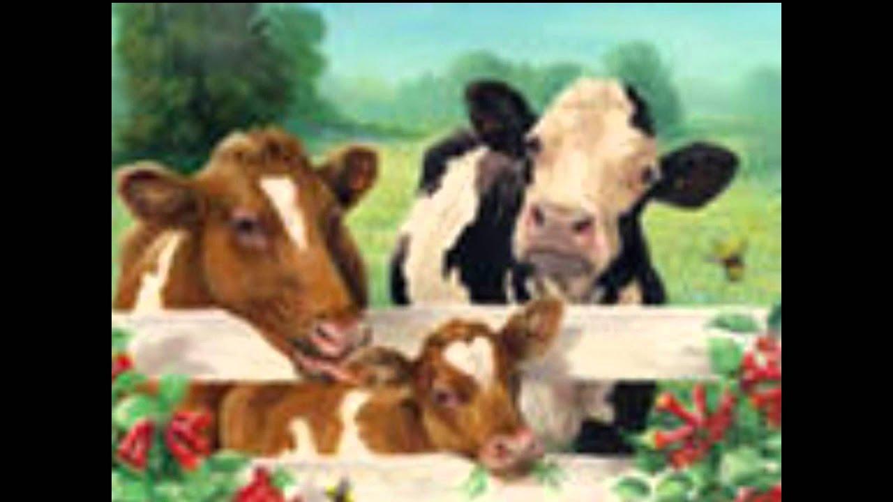 Смотреть секс коровы и быка 3 фотография