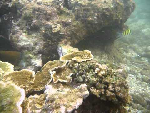 Sri Lanka,ශ්රී ලංකා,Ceylon,Coral Reef (10)