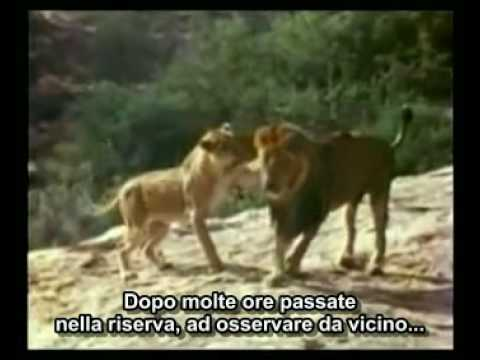 L'incredibile storia del leone Christian (sottotitoli in italiano)