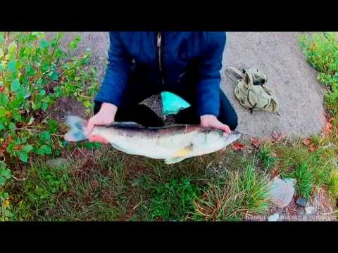 платная рыбалка в набережных челнах август