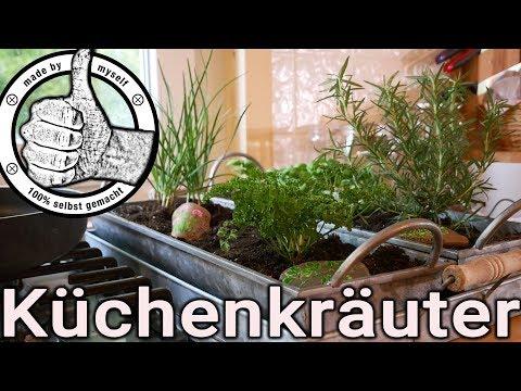 Kräutergarten selber machen, Küchenkräuter richtig pflegen, Basilikum, Schnittlauch, Petersilie