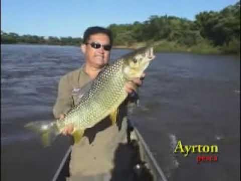 Programa de pesca - Ayrton pesca FISH TV - Veja mais! www.videospesca.com.br
