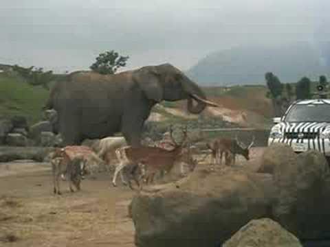 別府アフリカンサファリにて!象さんが餌を貰っていました。