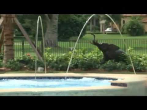 Jardines y piscinas honduras 2 2 youtube for Jardines y piscinas borrego
