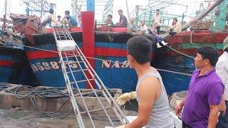 Tin Tức 24h Mới Nhất: Ngư dân Nghệ An trúng mẻ cá hơn một tỷ đồng