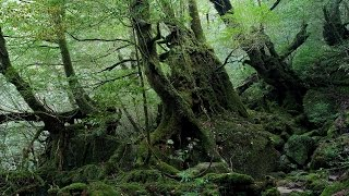 Beautiful Japanese Music - Forest of Japan