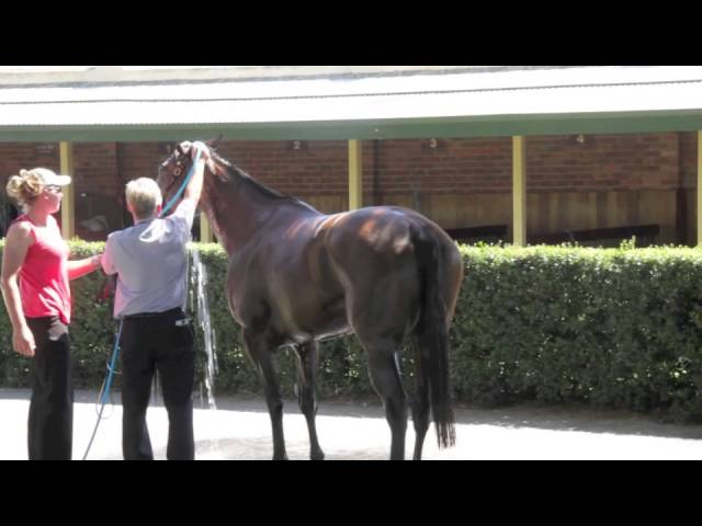 Racehorse Heat Stress