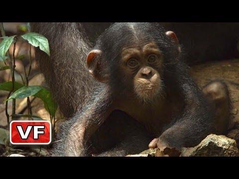 image vidéo Chimpanzés : le nouveau film de Disney Nature (2013)
